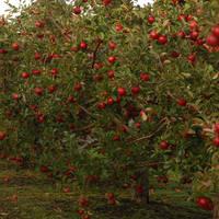 Apple Tree by myrnajacobs
