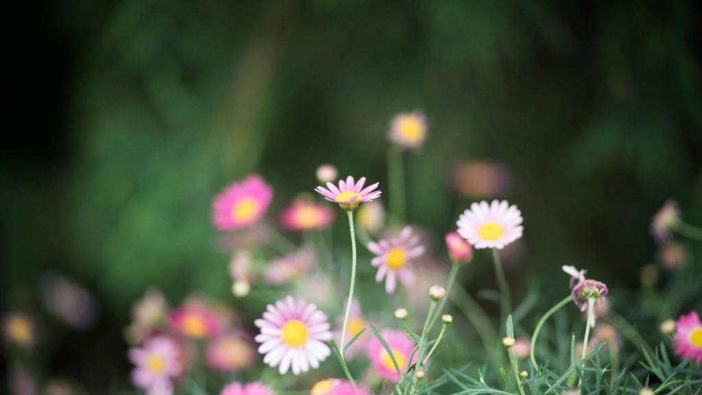 enchanted by feria233
