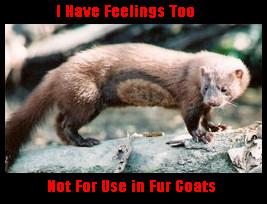 Don't Wear Fur by punkturedstranger