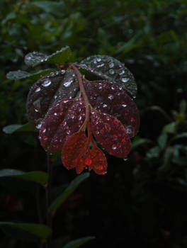 The Rainy Plant