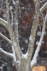 Snowfall 4 by Celebrith