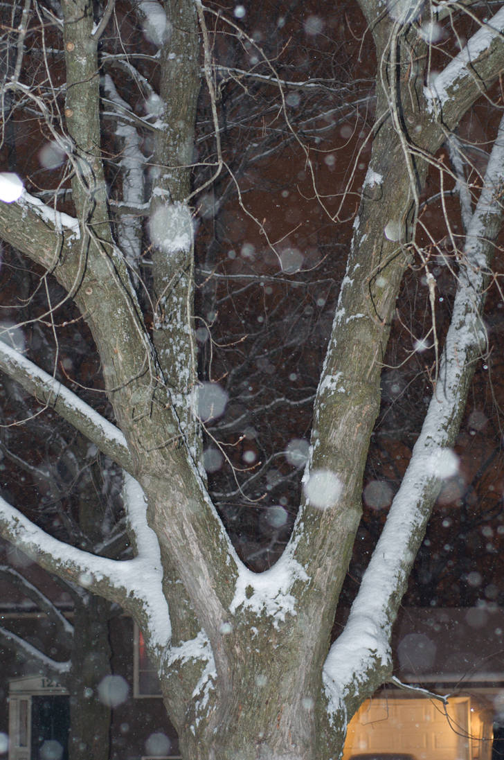 Snowfall 5