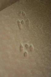 Snowfall 10 Bunny Tracks by Celebrith