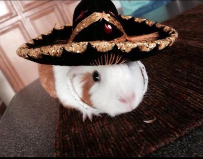 Sombrero Pig by AColorlessWorld
