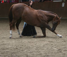 horse bow on a performance stock image by Nexu4