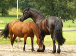 good friends - friesian and bay welsh 02