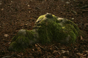 forest root of a tree with moss by Nexu4