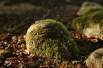 forest root of a tree with moss 02