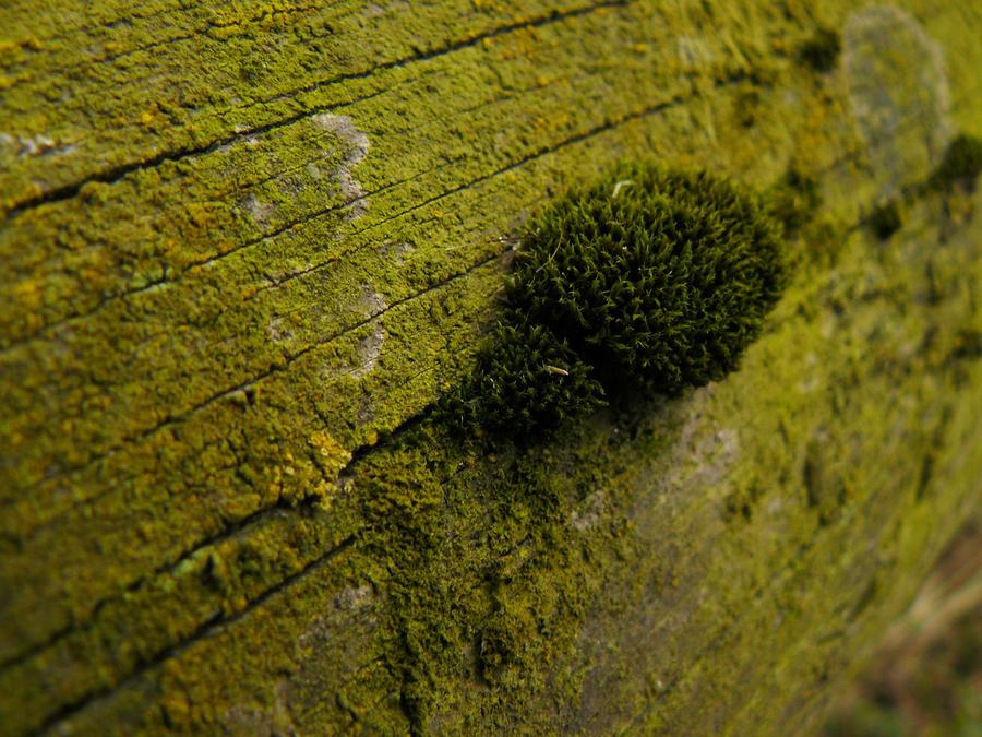 little green moss world stock by nexu4 on deviantart. Black Bedroom Furniture Sets. Home Design Ideas