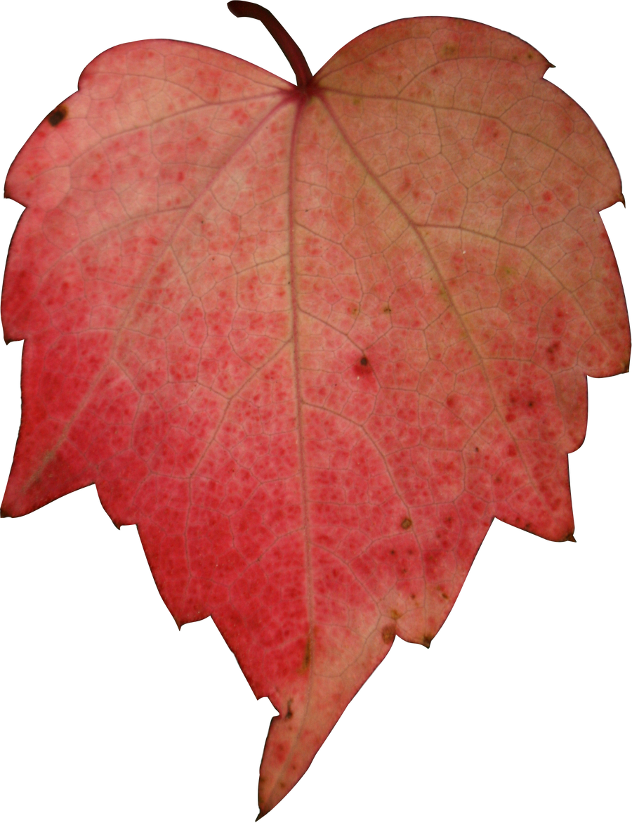 stock red heart leave autumn png by Nexu4 on DeviantArt