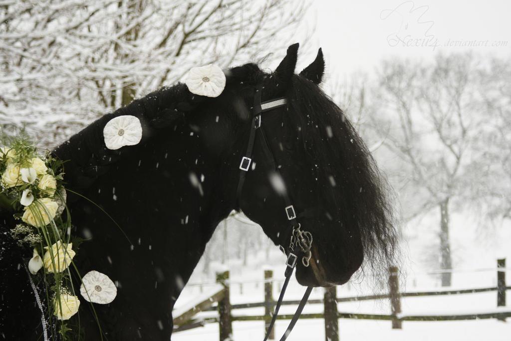 Wedding Friesian Horse In The Snow By Nexu4