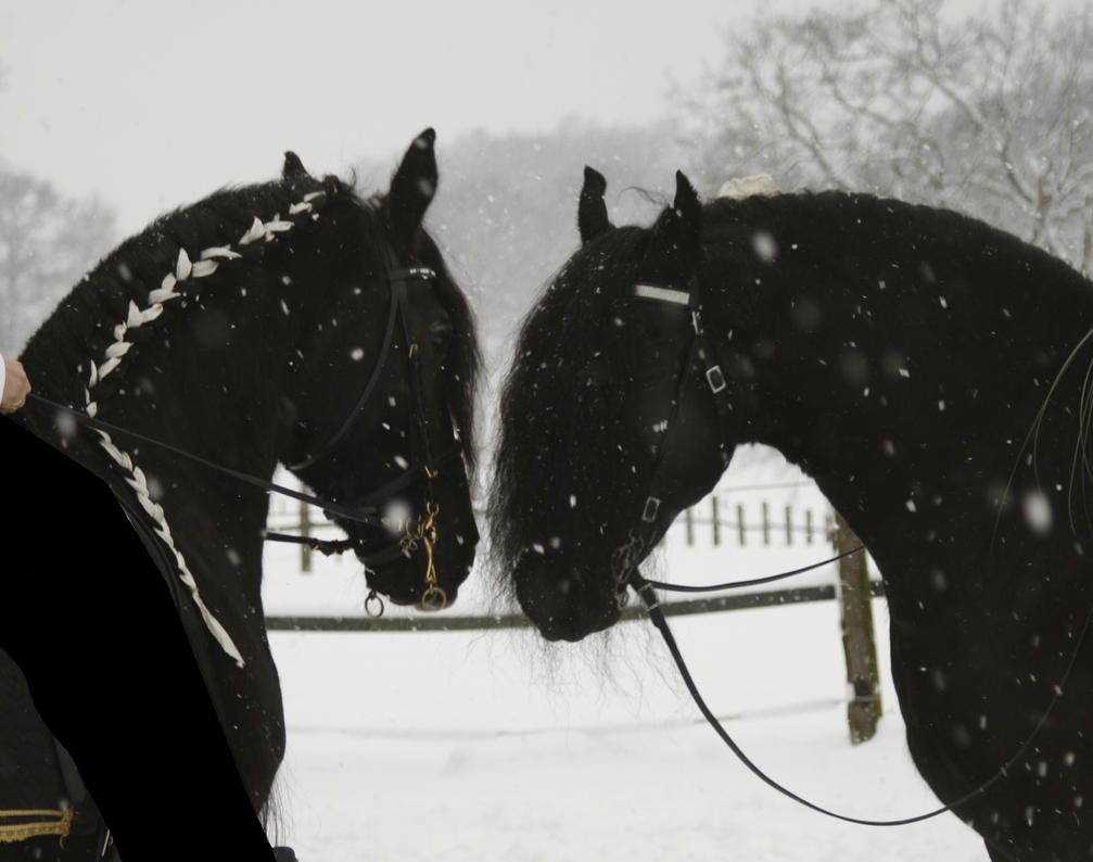 frisian love in the snow by Nexu4