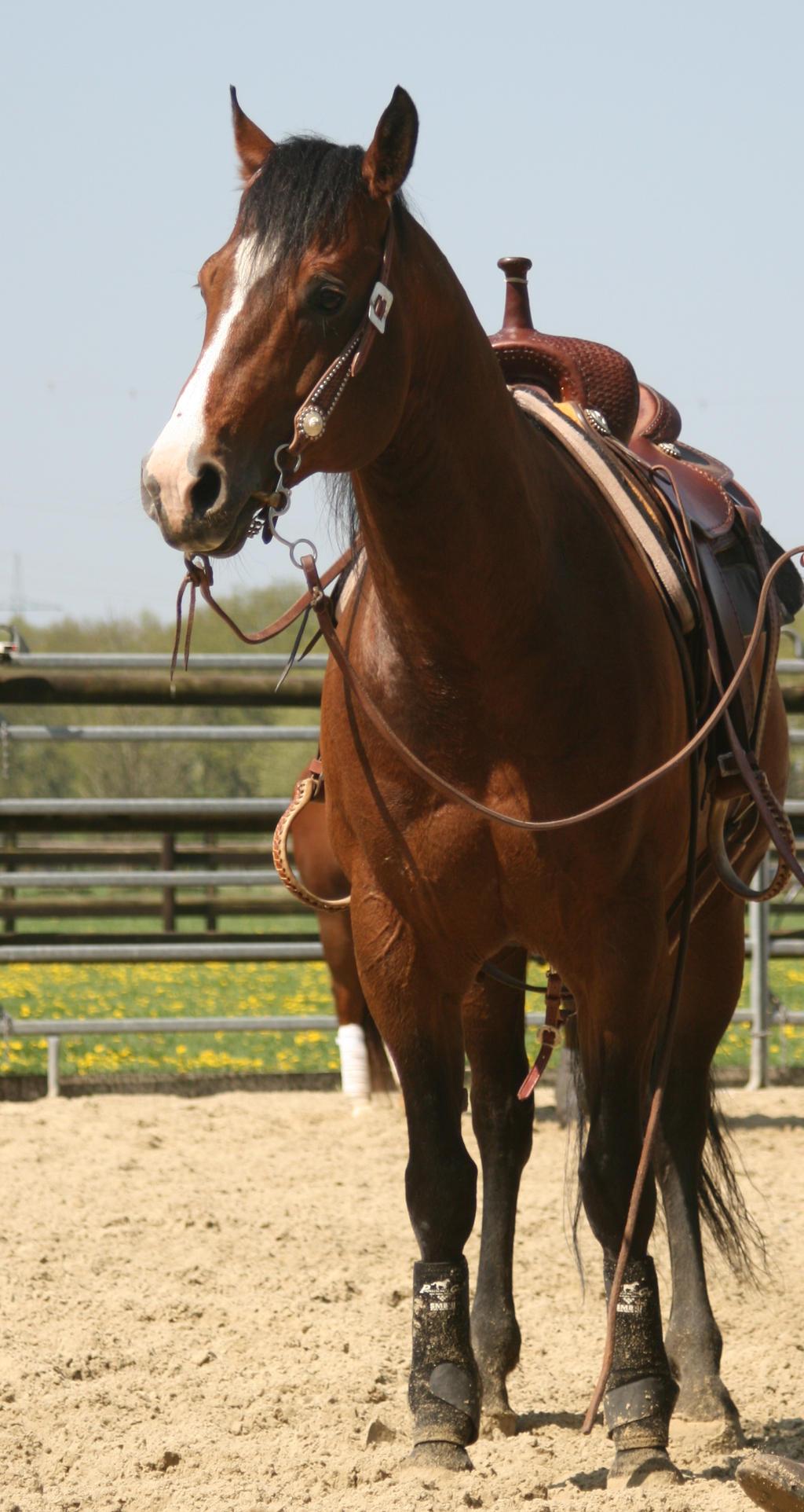 western horse quarter by Nexu4 on DeviantArt