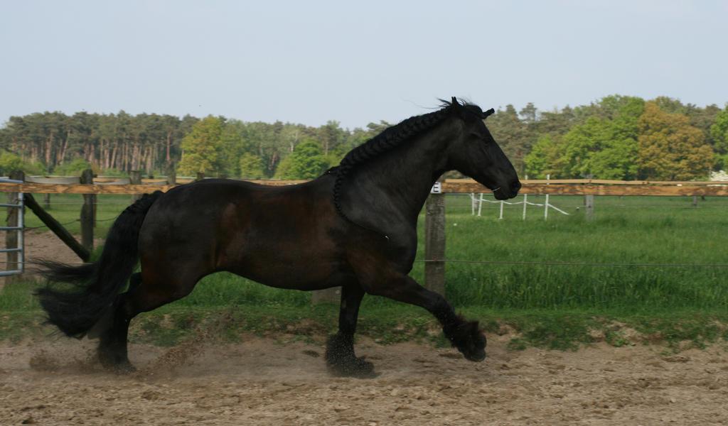 fast friesian galloping by Nexu4