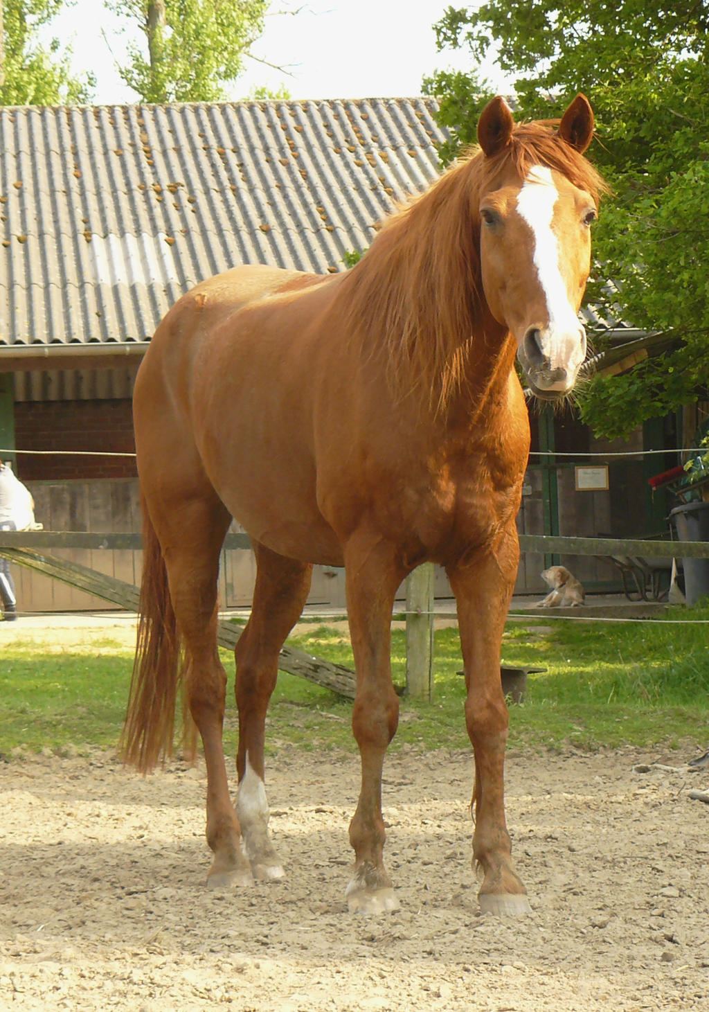 Horse standing in front by nexu4 on deviantart chestnut horse standing in front by nexu4 sciox Choice Image