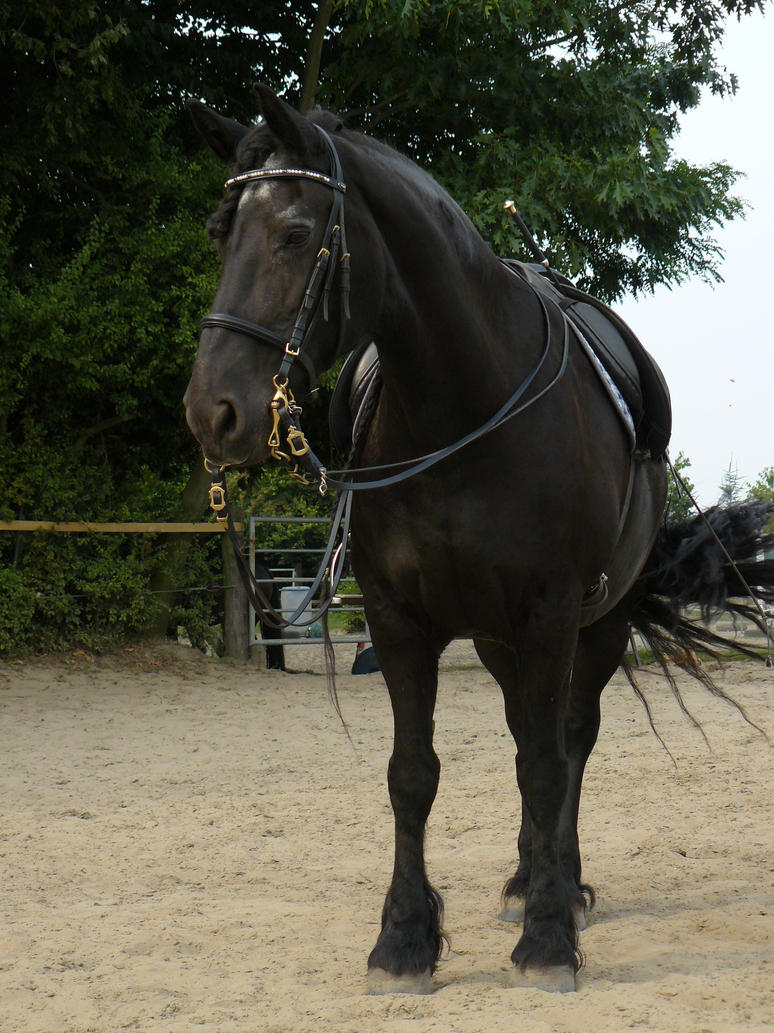friesian mare saddled by Nexu4