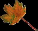 maple leaf 2 orange and green precut png