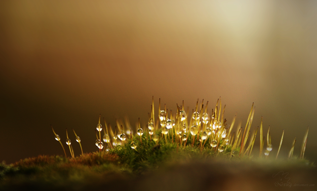 moss and waterdrops in the morning by Nexu4