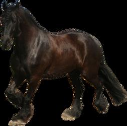 friesian horse trotting precut png