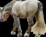 grey andalusian horse walking precut png