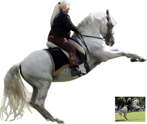 white andalusian on a show 2 by Nexu4