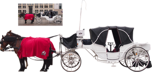 white horse carriage png