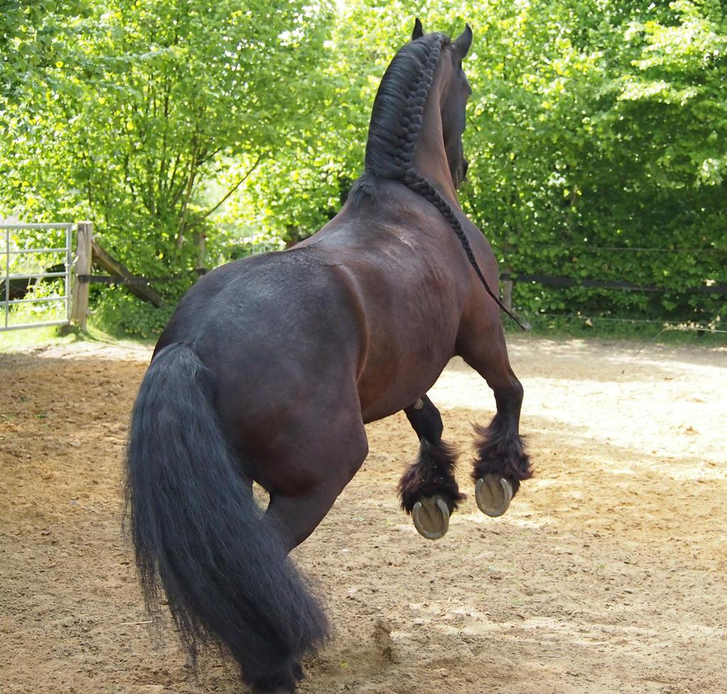 black horse finance