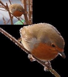 bird robin precut