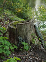 another tree stump by Nexu4