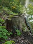 another tree stump