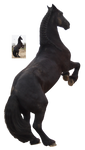 frisian rearing precut png black horse by Nexu4