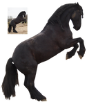 friesian rearing 2 black horse precut png stock by Nexu4