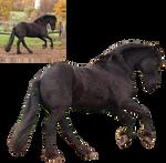 frisian gallop png precut black horse by Nexu4