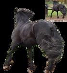 frisian black horse rear view precut by Nexu4