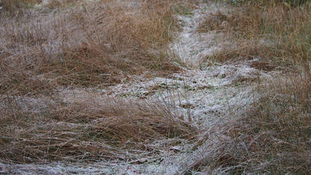 frosty path in meadow by Nexu4