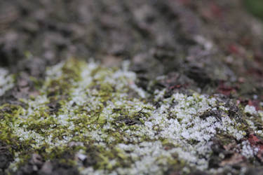 frosty moss background