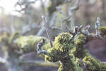 moss world in january