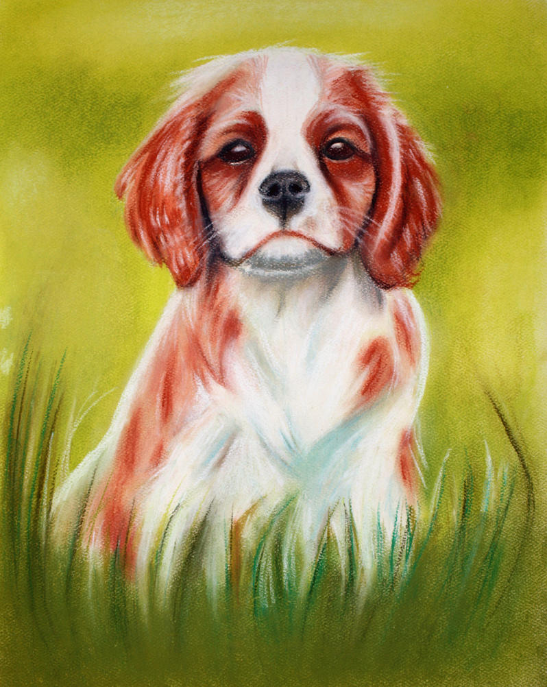 Cavalier King Charles Spaniel by mj-magic