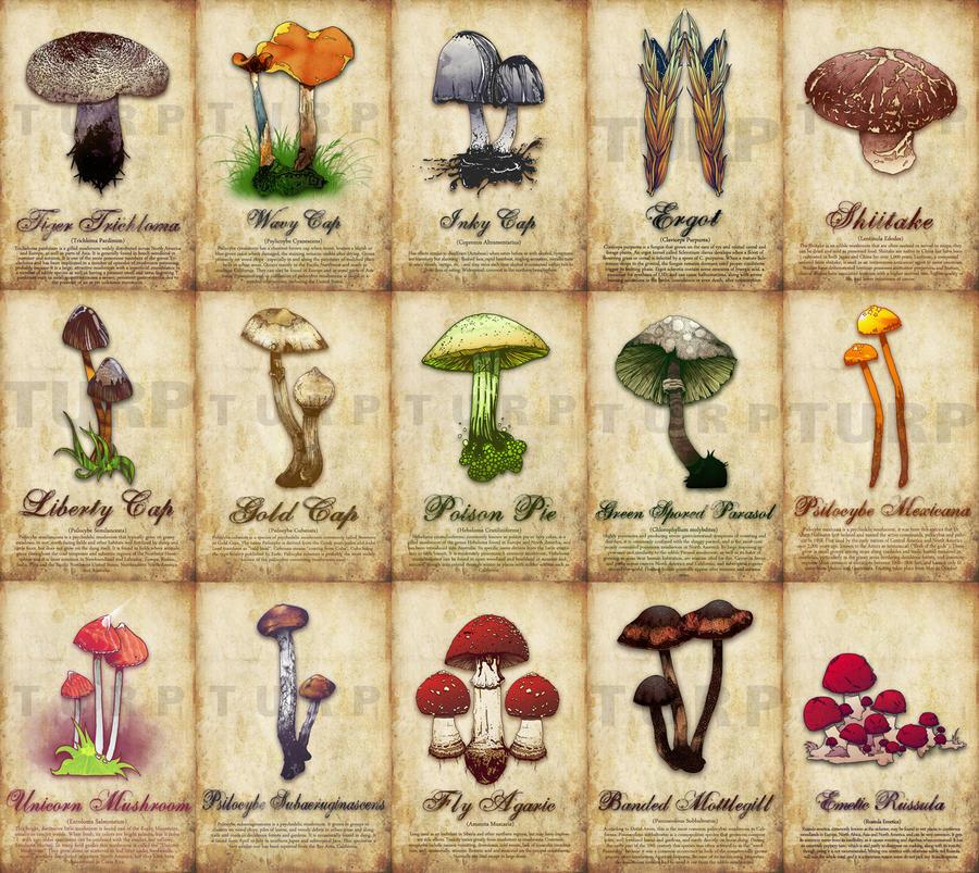 Mushroom Poster by turp on DeviantArt