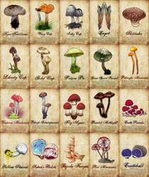 Mushroom Poster 02