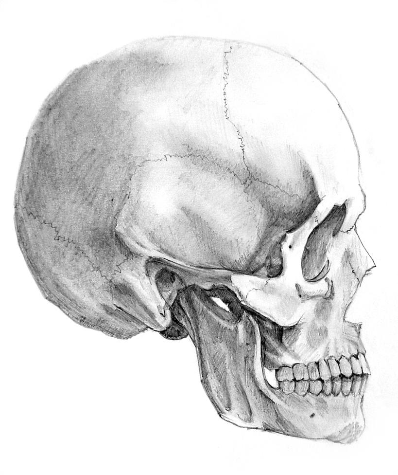 It's just an image of Refreshing Skull Profile Drawing