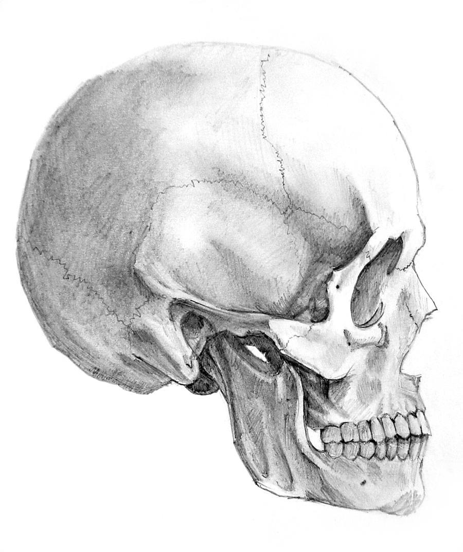 Skull side view by AlexandrosIII on DeviantArt