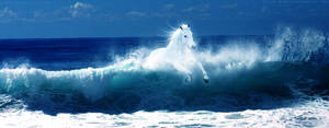 Horse of the Ocean
