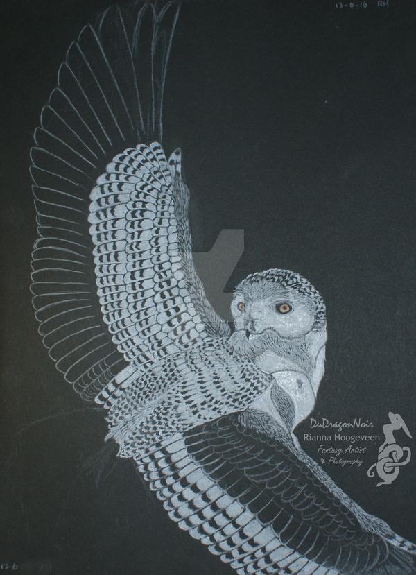 Snowy owl by DuDragonNoir