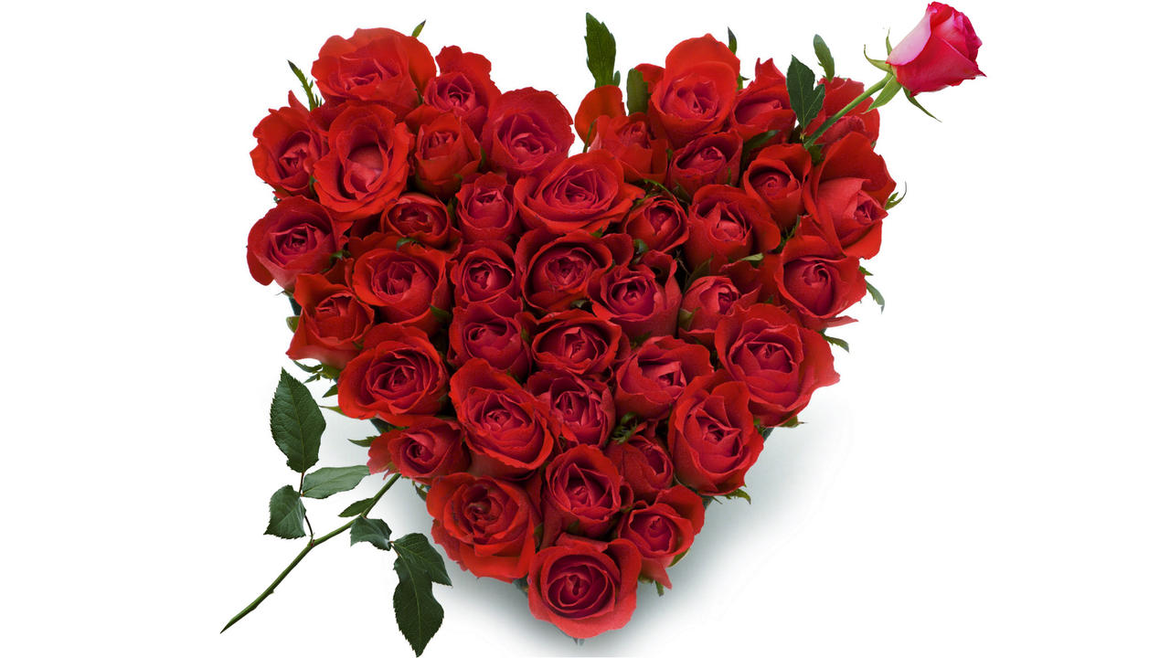 of roses hit by Cupid s  Roses