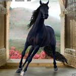 Horse Avatar#7