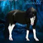 Horse Avatar#8