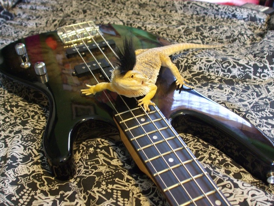 Rock on by RainbowWolfiex