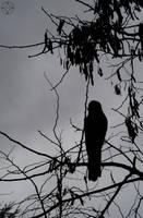 Rain Bird by Orstrix