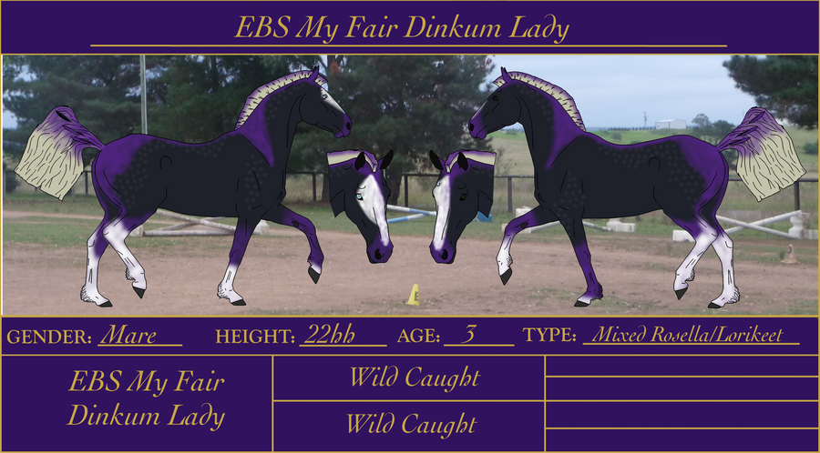 EBS My Fair Dinkum Lady by Orstrix
